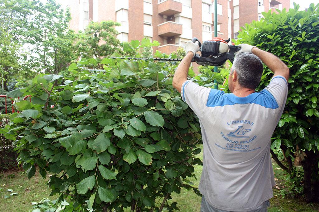 Jardiner a limpiezas verdejo pel ez for Jardineria leon